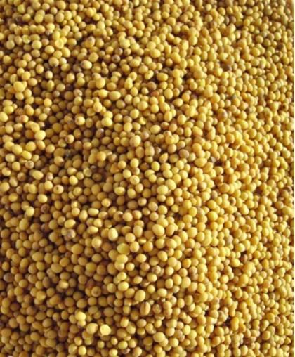 Семена Горчицы -  20 кг